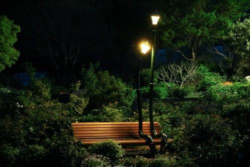 寄り添う外灯ベンチ夜